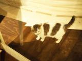 「【ファームグランピング京都天橋立】自分で作る♪楽々うまうまBBQごはん!」の画像(22枚目)