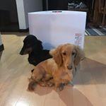#筋トレわんわん #犬用HMBサプリ #犬用筋肉ケア #犬の健康寿命 #犬用ケアサプリメント #monipla #meneki_fan・この犬なのに寒がりコンビ😂にもってこいなサプリ💊✨気にな…のInstagram画像