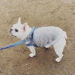 #兼松ウェルネス株式会社 様の  #筋トレわんわん が気になる!『より効果のあるケアサプリメントをあげたい(しっかりした素材)』『愛犬が抱える悩みを解消したい(運動不足)』『筋…のInstagram画像