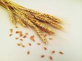 「築野食品さんの米粉のスイーツ」の画像(1枚目)