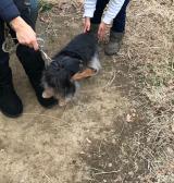 犬の散歩の画像(1枚目)