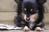 「犬用コラーゲン!「健・ドッグ」   始加の部屋 - 楽天ブログ」の画像(6枚目)