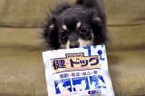 「犬用コラーゲン!「健・ドッグ」   始加の部屋 - 楽天ブログ」の画像(5枚目)