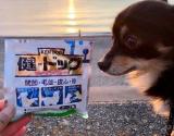 「犬用コラーゲン!「健・ドッグ」   始加の部屋 - 楽天ブログ」の画像(2枚目)
