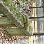 ラブ&ピース世界の平和#愛の木に願いを #メリーチョコレート #monipla #mary_fanのInstagram画像