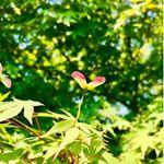 .今年もこの季節がやってきましたね。愛の木に願うことは、これまでも、そして、これからも変わることなく。この毎日のあたりまえの日々、そして子どもたちの未来が愛あふれる平和な世界であることを願って…。…のInstagram画像