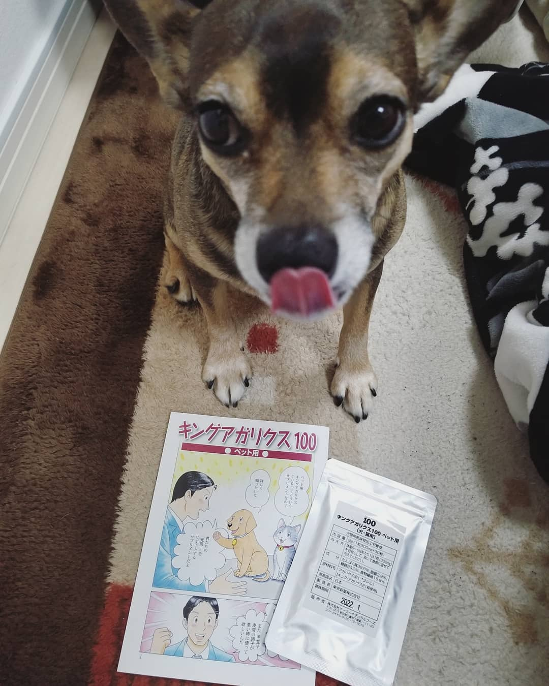 口コミ投稿:..犬猫用アガリクス【キングアガリクス100ペット用】免疫サポートサプリの王様・内容…