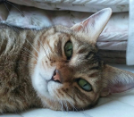 ゚+.*♡*.+゚キャンペーン参加させて頂きます♡♡#寝起き が可愛い愛らしい女の子です!おてんばでお散歩好きな元気な女の子です✨これからも元気でいてくれます…のInstagram画像