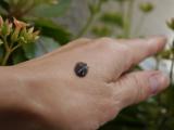 黒い炭酸泡のチカラ・JUSO KURO PACKの画像(2枚目)