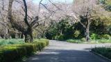 新宿御苑をお散歩の画像(13枚目)