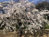 新宿御苑をお散歩の画像(5枚目)