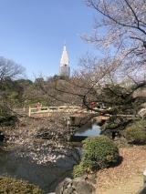 新宿御苑をお散歩の画像(8枚目)