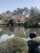 新宿御苑をお散歩の画像(7枚目)