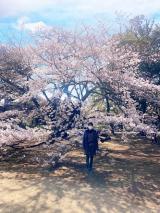 新宿御苑をお散歩の画像(3枚目)