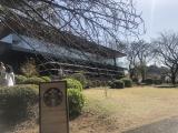新宿御苑をお散歩の画像(12枚目)