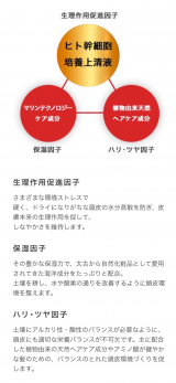 「ヒト幹細胞配合養毛料☆セルヘアプラス」の画像(4枚目)