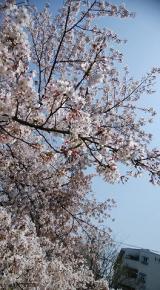 「桜に癒された日」の画像(6枚目)