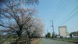 「桜に癒された日」の画像(1枚目)