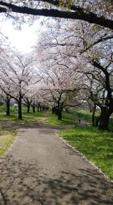 「桜に癒された日」の画像(4枚目)