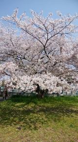 「桜に癒された日」の画像(5枚目)