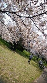 「桜に癒された日」の画像(3枚目)