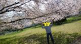 「桜に癒された日」の画像(2枚目)