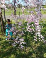 ....Pic①..1週間前くらいに.公園で見た垂れ桜🌸🌸🌸..もぅ散っちゃったかなぁ。。..#トトロ#春#4歳#4歳男の子#春#桜#お花見#テニテオ#…のInstagram画像