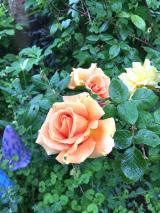うちの庭の草花が美しすぎます。の画像(11枚目)