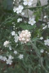 うちの庭の草花が美しすぎます。の画像(4枚目)