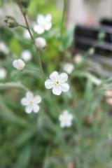 うちの庭の草花が美しすぎます。の画像(5枚目)