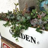 うちの庭の草花が美しすぎます。の画像(14枚目)