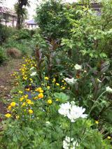 うちの庭の草花が美しすぎます。の画像(12枚目)
