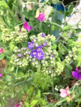 うちの庭の草花が美しすぎます。の画像(3枚目)