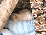 「太郎の寝床」の画像(2枚目)