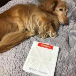 🌱 犬を飼っているとダニが気になりますよね💦ということで日革研究所のダニ捕りロボを試してみました👍🏻こちらはダニを誘引し捕獲、閉じ込めてそのまま捨てることが出来る商品です。有害物質が含まれてい…のInstagram画像