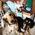 #愛犬 #まめとそぼろ の#シール と#キーホルダー を作ったよ〜♫・#スマホの写真 でいつでもカンタンに#オリジナルシール が作れちゃうアプリ「Seel(シール)」のヤツ〜٩(๑…のInstagram画像