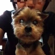 「珍しくカメラ目線(笑)」DOGSTANCE 鹿肉麹熟成<Instagram動画>投稿モニター10名様大募集!の投稿画像
