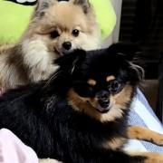 「ぺこ、ぶち」DOGSTANCE 鹿肉麹熟成<Instagram動画>投稿モニター10名様大募集!の投稿画像