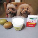 フィンランドで人気の発酵乳『ホームメイド・ヴィーリ』を作ってみたよ🤗*牛乳にヴィーリの粉末を入れて4、5回振り混ぜて室温に置いておくだけで発酵できちゃう✨*酸味が抑えられておいしいよ👍…のInstagram画像