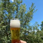 =================..先日、一瞬の晴れ間を利用して、夫に庭の木の剪定をしてもらいました◡̈..お疲れ様の気持ちを込めて特別に昼ビール🍺..今…のInstagram画像