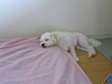 太郎の寝場所の画像(2枚目)
