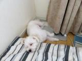太郎の寝場所の画像(5枚目)