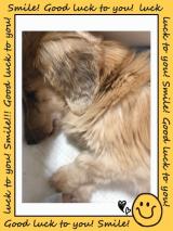 我が家の老犬の健康サポート MREフードプラス パート1の画像(1枚目)