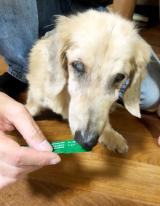 我が家の老犬の健康サポート MREフードプラス パート1の画像(3枚目)