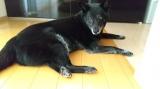 Nanaパウダータイプで手作り犬ご飯の画像(6枚目)
