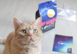 グルメな猫ちゃんに♡2種のアソートが楽しめる国産のカリカリフード「LUNA(ルナ)」 の画像(1枚目)