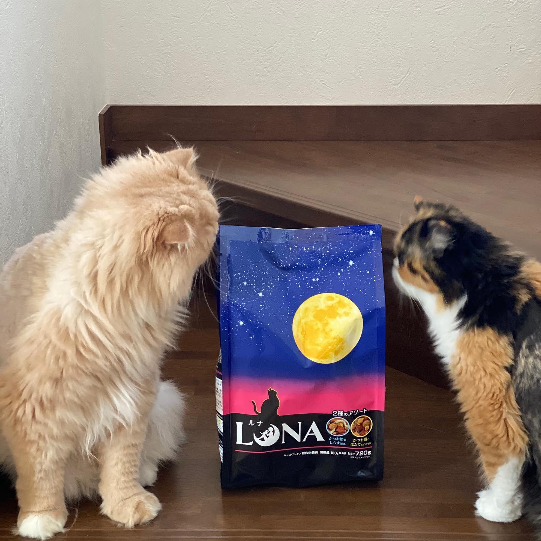 口コミ投稿:グルメの猫ちゃんのための安心国産のごちそうカリカリフードキャットフード LUNA…