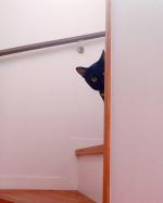 ..📷①.ふと階段を見たら目が合いましたw.見られてたw.日本では黒猫は不吉〰️😱😱😱なんて言われることがあるけどイギリスやスコットランドでは逆に…のInstagram画像