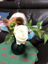 お花の定期便ですの画像(5枚目)
