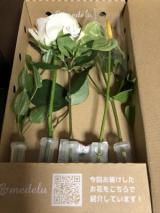 お花の定期便ですの画像(3枚目)